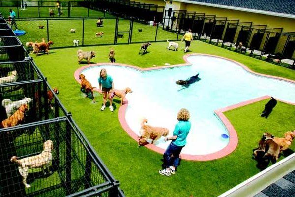 Pensioni cani Napoli, prezzi e migliori strutture estive dove lasciare il proprio cane