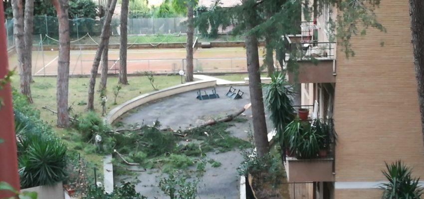 Forte vento a Roma: caduta alberi nella Capitale
