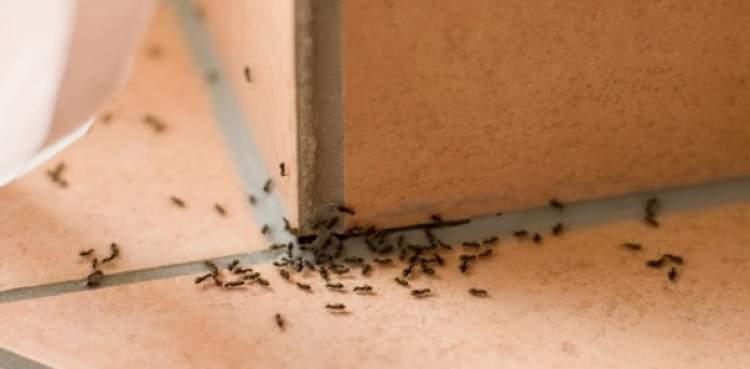 Rimedio efficace contro le formiche